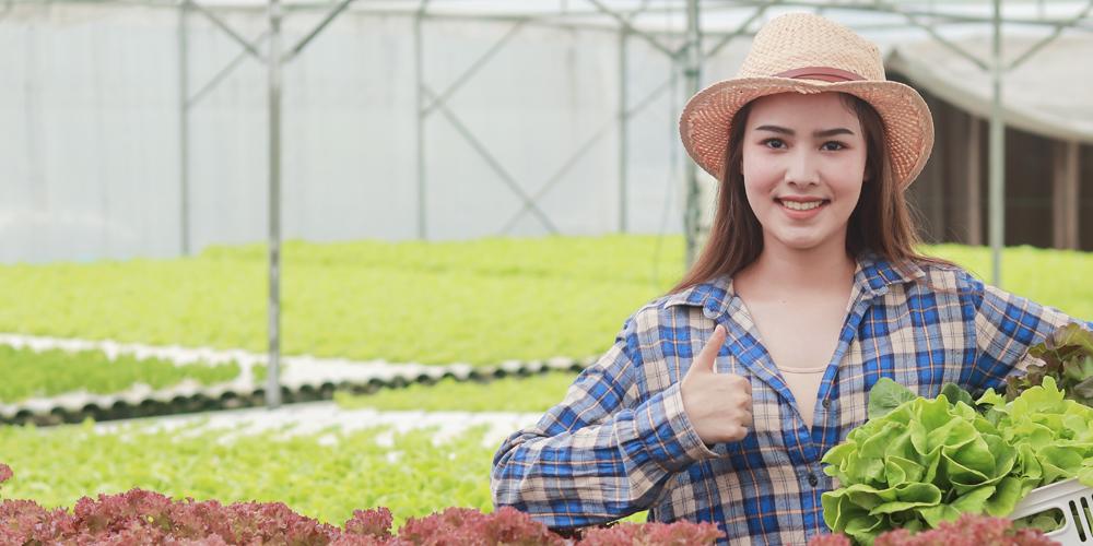 Agricultural Web Design